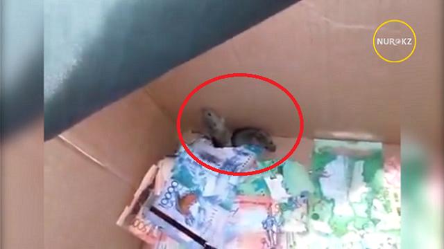 ATMの中に潜り込んだネズミは紙幣を噛み砕きまくってましたw