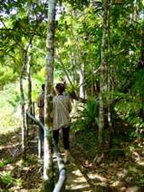 横井さんのジャングル