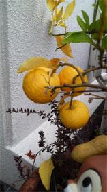 ガーデニング4(オレンジ)
