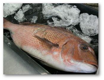 tai-fish