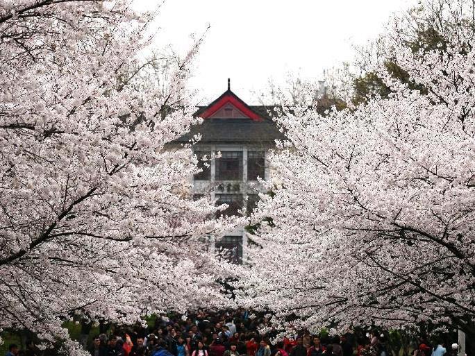 南京農業大学