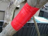 幹の保護2