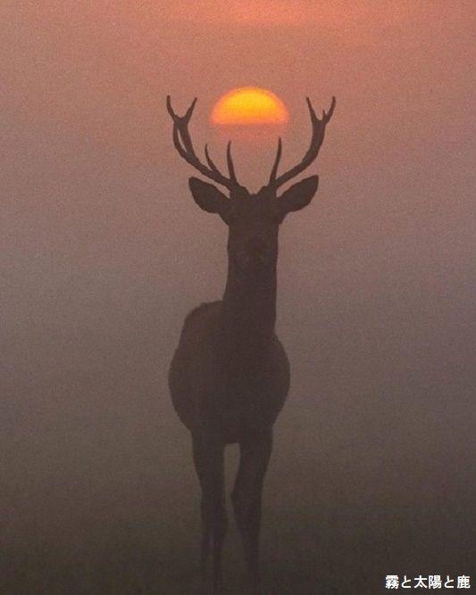 霧と太陽と鹿