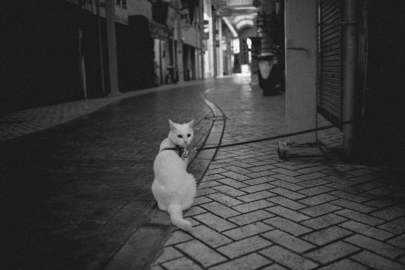猫にゃんこ