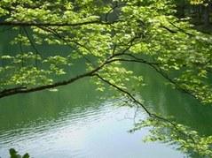 新緑のドッコ沼
