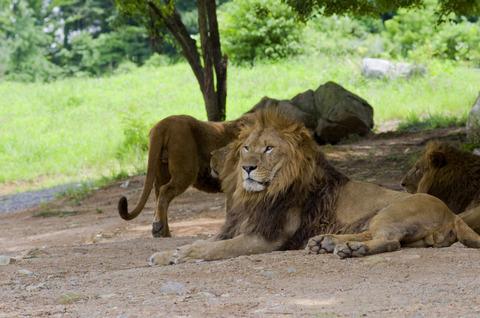 E_04_safariland_07_06