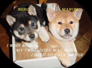 MARON AND NERO
