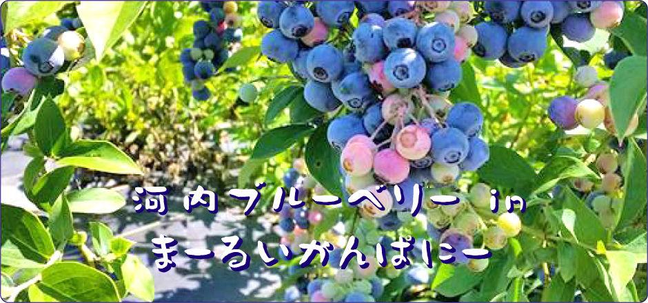 イメージ写真05