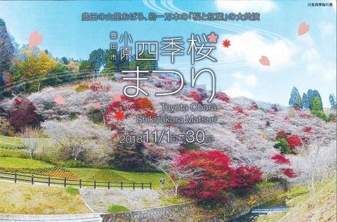 小原四季桜 (2)