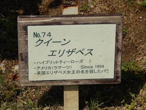 DSCN1864