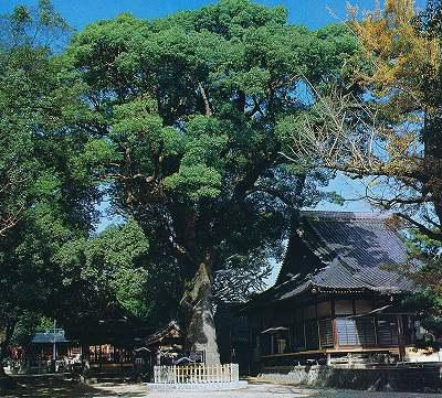豊田の文化財より挙母神社の樟