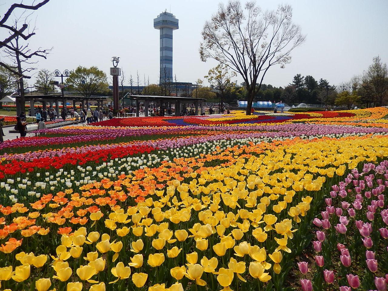 木曽三川公園のチューリップ祭り : やつば池散歩道(豊田市 ...