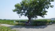 木陰とハンターカブ