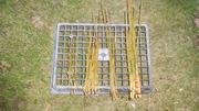 高野竹水洗い後
