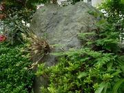 石斛とシノブ