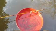 タナゴ釣り (2)