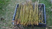 高野竹水洗い