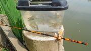 タナゴ釣り2