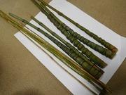布袋竹と高野竹