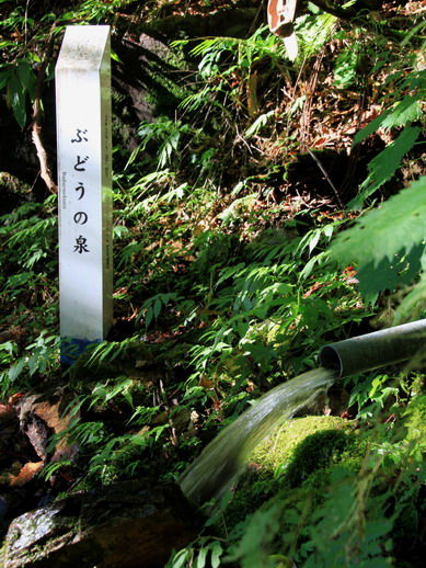 20111121budounoizumi-777