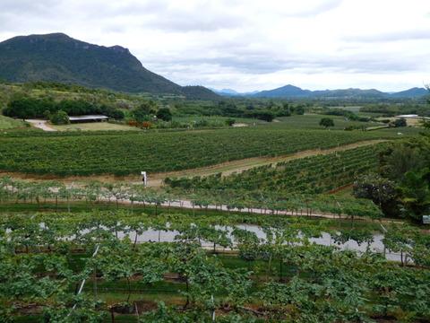 Monsoon Valley Vineyard (1)