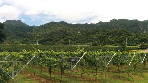 GranMonte asoke valley_06