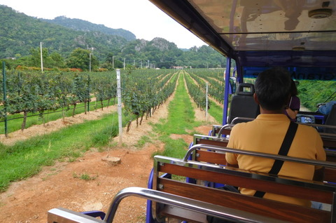 Tour of GranMonte Vineyard (3)