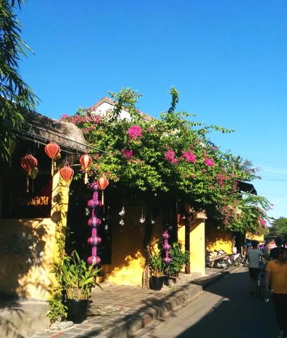 Hoi An Town_Bougainvillea_03