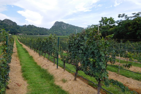 Tour of GranMonte Vineyard (1)