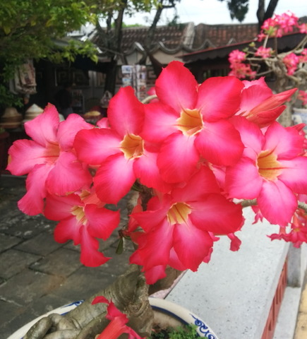 Hoi Quan Phuc Kien_06