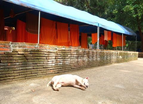 Thailand_Chiang Mai_Wat Umong_Buddhist temple_D2-10