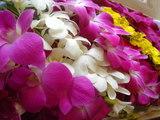 タイからのお花2