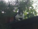 お隣の猫ちゃん
