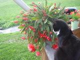 サボテンの花とサマ