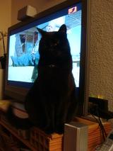 トノちゃんテレビ見えないよ。。。0504