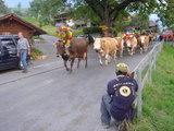 牛の写真を撮るケンタロウ