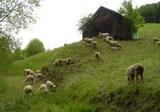 羊の放牧地