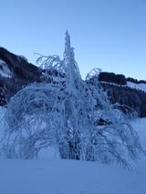 木も凍るわね。