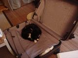 スーツケースの中で寝るさま