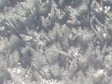 雪の結晶?