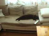トノのお昼寝