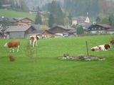 牛がいますな〜