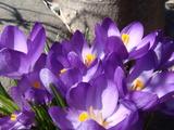 春らしく2