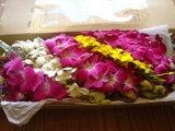 タイからのお花