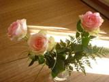ホウちゃんからのバラ