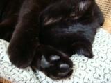トノちゃん睡眠中