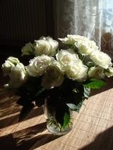 今週の花〜バラ