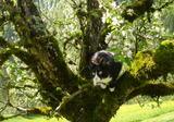 サマの木登り