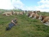 hou-chan & cow
