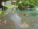 洪水Oberried1